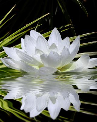Lotus and Spa Stones - Obrázkek zdarma pro 640x1136