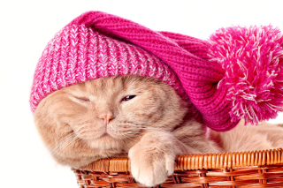 Kitten in Basket Background for Android, iPhone and iPad