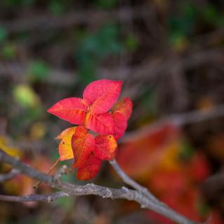 Macro Autumn Leaf - Obrázkek zdarma pro 2048x2048