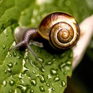 Snail and Drops - Obrázkek zdarma pro iPad 3
