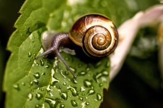 Snail and Drops Wallpaper for Android, iPhone and iPad