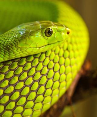 Green Snake Macro - Obrázkek zdarma pro Nokia X1-00