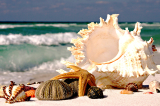 Seashells sfondi gratuiti per cellulari Android, iPhone, iPad e desktop