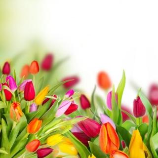 Tender Spring Tulips - Obrázkek zdarma pro iPad 2