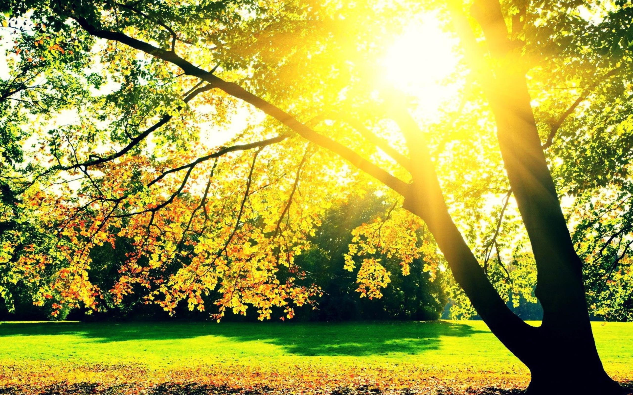 деревья листва осень солнце  № 3191815 бесплатно