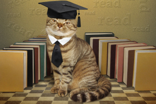 Clever cat with Books sfondi gratuiti per cellulari Android, iPhone, iPad e desktop