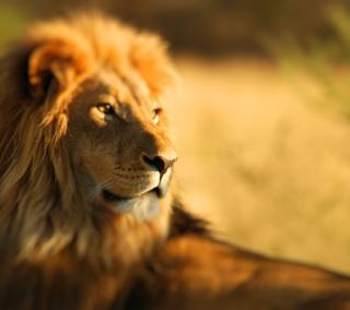 King Lion - Obrázkek zdarma pro iPad