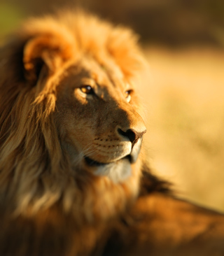 King Lion - Obrázkek zdarma pro 360x480