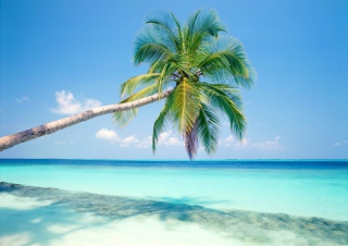 Blue Shore And Palm Tree Background for Android, iPhone and iPad