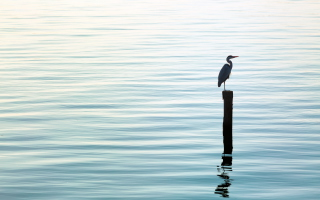 Free Lonely Bird Picture for Android, iPhone and iPad