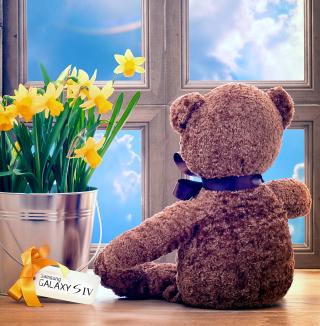 Teddy Bear with Bouquet - Obrázkek zdarma pro iPad Air