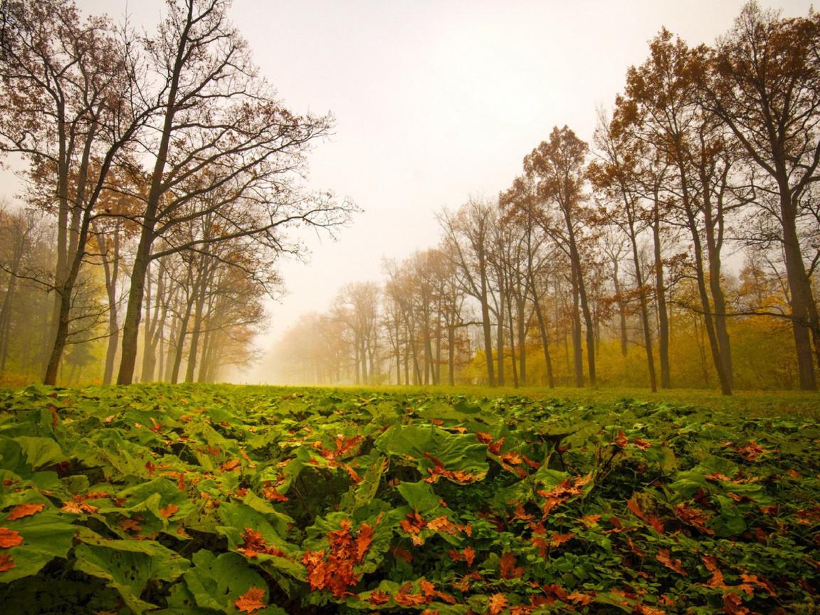лес деревья листья  № 919356 без смс