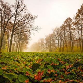 Autumn leaves fall - Obrázkek zdarma pro iPad