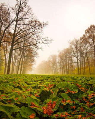 Autumn leaves fall - Obrázkek zdarma pro Nokia Asha 306