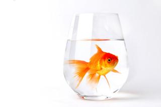 Goldfish in Glass sfondi gratuiti per cellulari Android, iPhone, iPad e desktop