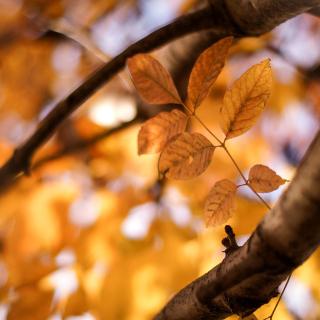Yellow Macro Autumn Leaves - Obrázkek zdarma pro 2048x2048