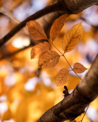 Yellow Macro Autumn Leaves - Obrázkek zdarma pro 768x1280