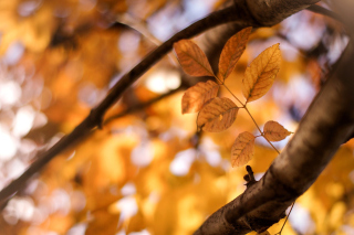 Yellow Macro Autumn Leaves Background for Android, iPhone and iPad