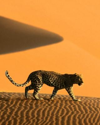 Cheetah In Desert - Obrázkek zdarma pro Nokia C2-00