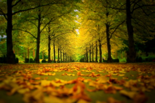 Autumn Park Background for Android, iPhone and iPad