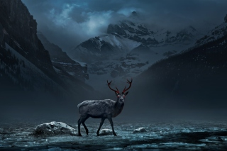 Reindeer Wallpaper for Android, iPhone and iPad