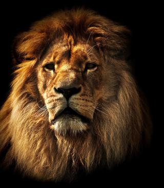Lion - Obrázkek zdarma pro iPhone 6
