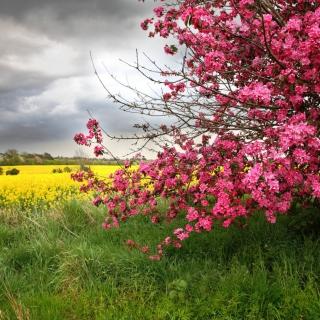 Spring Field - Obrázkek zdarma pro iPad