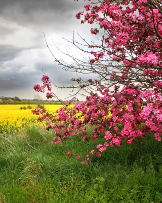 Spring Field - Obrázkek zdarma pro Nokia Asha 306