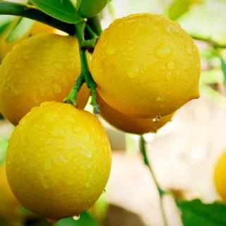 Lemon Drops - Obrázkek zdarma pro iPad 2