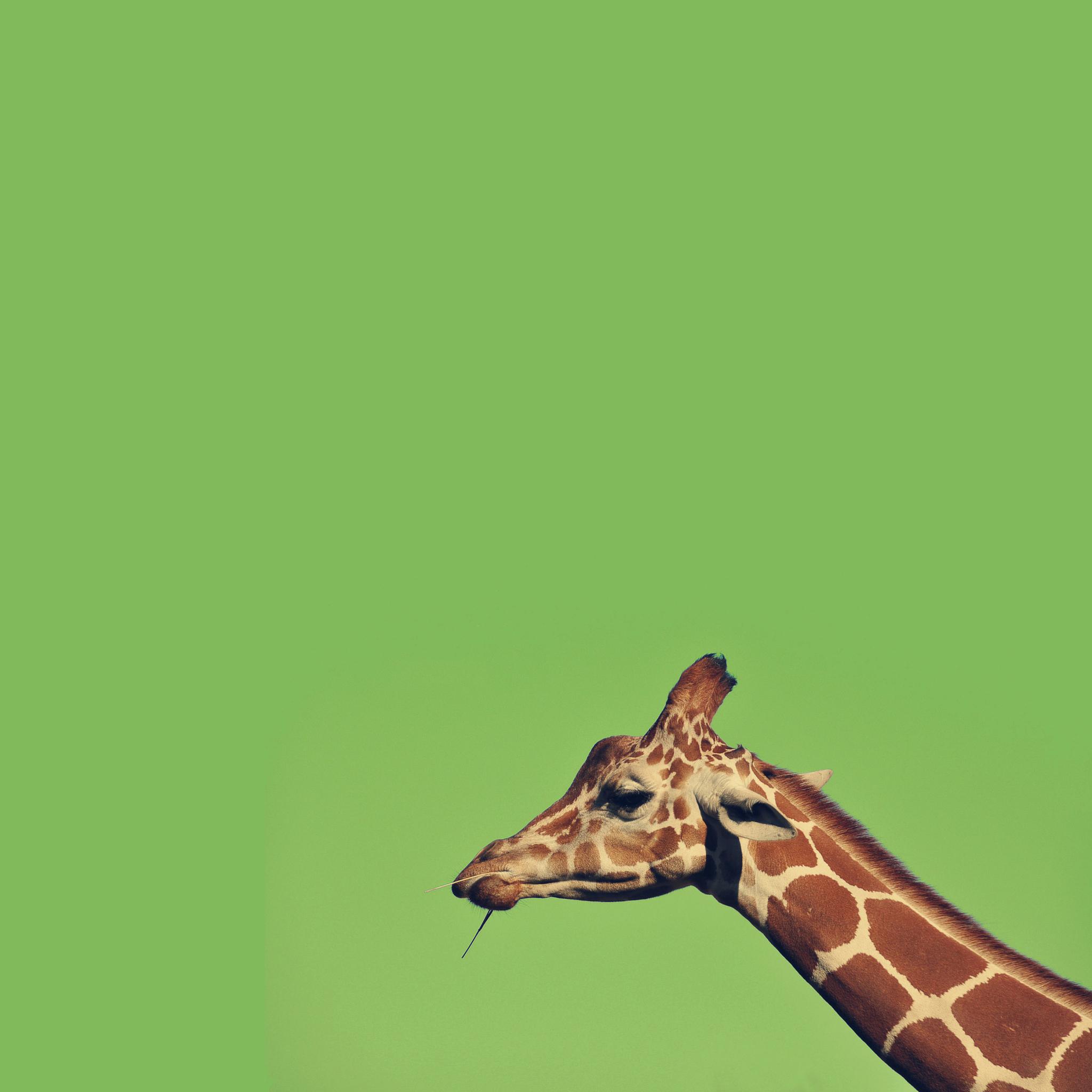 жираф рисунок  № 3522602 бесплатно