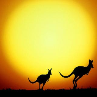 Kangaroo At Sunset - Obrázkek zdarma pro iPad Air