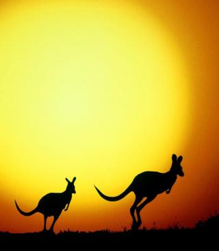 Kangaroo At Sunset - Obrázkek zdarma pro Nokia C2-06