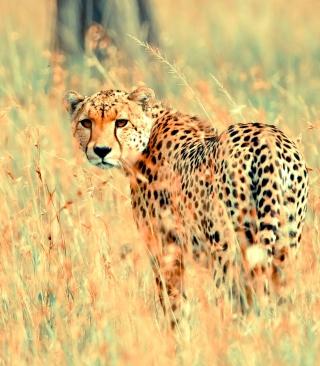 Beautiful Cheetah - Obrázkek zdarma pro Nokia C2-00
