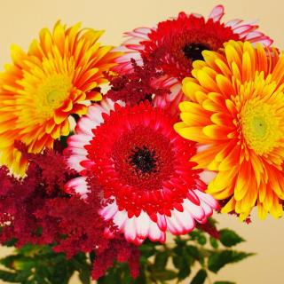 Gerbera Wedding Bouquet - Obrázkek zdarma pro 128x128