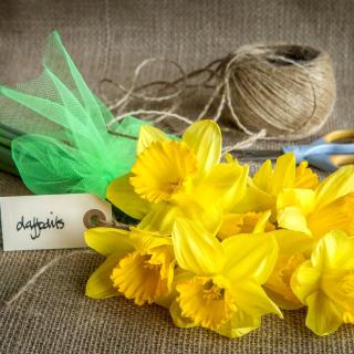 Daffodils bouquet - Obrázkek zdarma pro iPad 2
