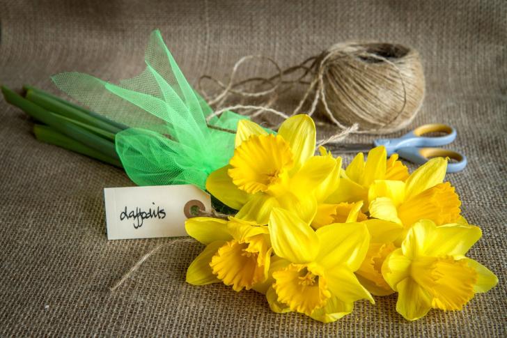 Daffodils bouquet wallpaper