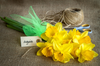 Daffodils bouquet Wallpaper for Android, iPhone and iPad