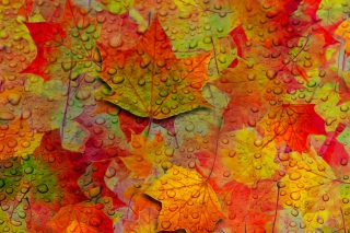 Abstract Fall Leaves Wallpaper for Android, iPhone and iPad