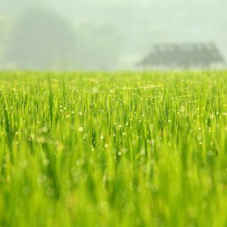Bokeh Green Grass - Obrázkek zdarma pro iPad 3