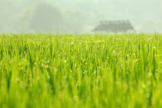Bokeh Green Grass Picture for Android, iPhone and iPad