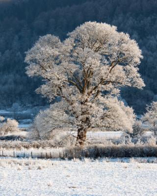 Hill in Snow - Obrázkek zdarma pro Nokia Lumia 1020