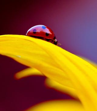 Red And Yellow - Obrázkek zdarma pro 360x640