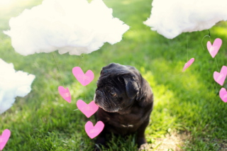 I Love My Dog Wallpaper for Android, iPhone and iPad