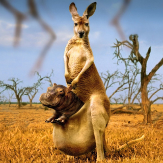 Kangaroo With Hippo - Obrázkek zdarma pro iPad Air