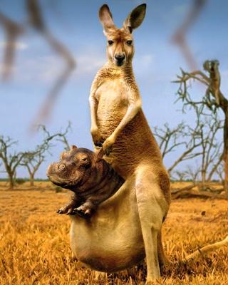 Kangaroo With Hippo - Obrázkek zdarma pro Nokia C2-06