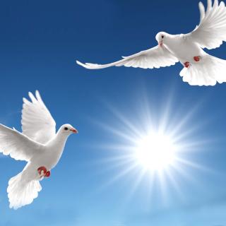 Pigeons - Obrázkek zdarma pro 320x320