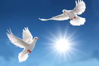 Pigeons - Obrázkek zdarma pro 1440x1280