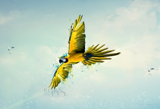 Born To Fly Picture for Android, iPhone and iPad