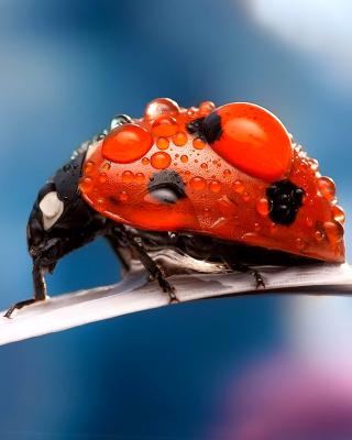 Maro Ladybug and Dews - Obrázkek zdarma pro Nokia Lumia 800