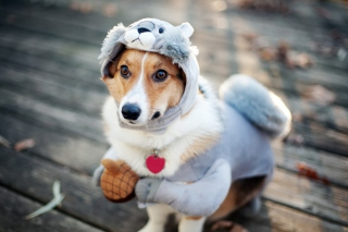 Dog In Funny Costume Wallpaper for Android, iPhone and iPad